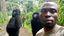Morta Ndakasi, la gorilla del selfie che fece il giro del mondo (foto Virunga  Park)