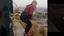 Frame del video della morte di Yevgenia Leontyeva