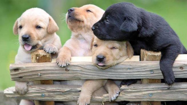Chiedono Lelemosina Con Cuccioli Di Cani E Poi Li Offrono In Regalo
