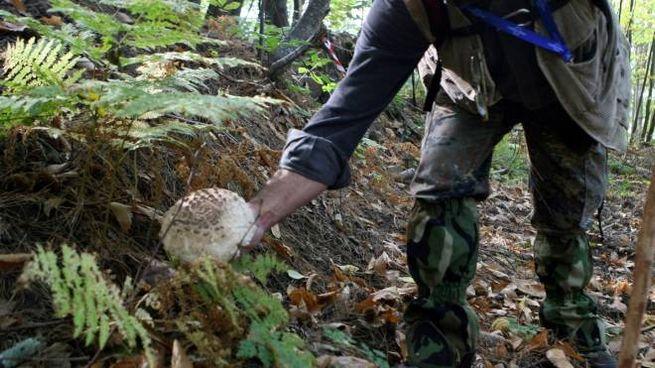 Cercatore di funghi (foto di repertorio)