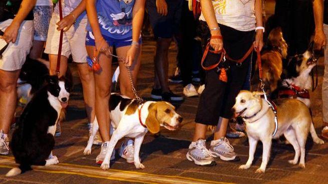 La Maratonina a sei zampe (foto Germogli)