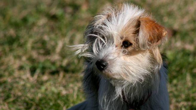 Cane in una foto L.Gallitto