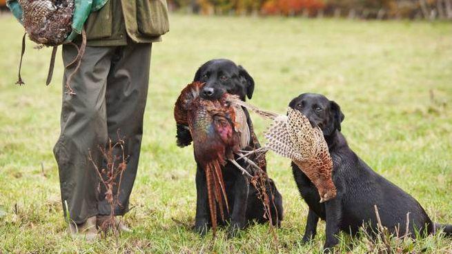 Cacciatore con i cani in una foto Olycom
