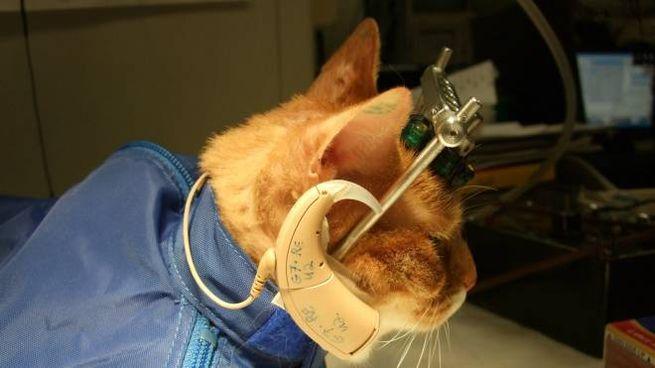 Gatto impiegato in un laboratorio in una foto Olycom