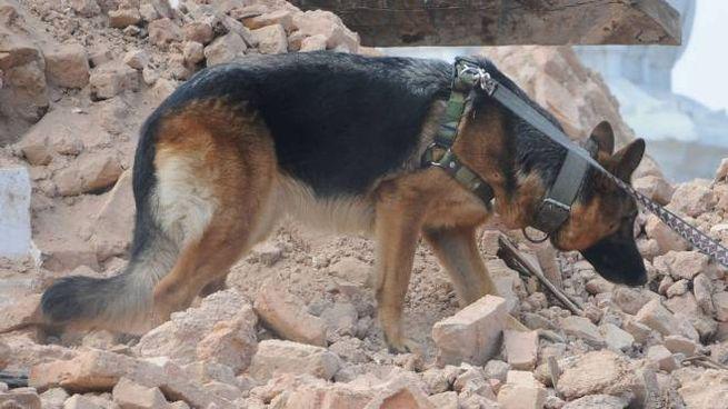 Da tutta Italia in arrivo i cani delle macerie per cercare ...