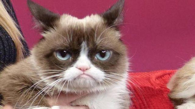 Grumpy Cat è morta (Ansa)