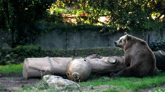 Orso in una foto L.Gallitto