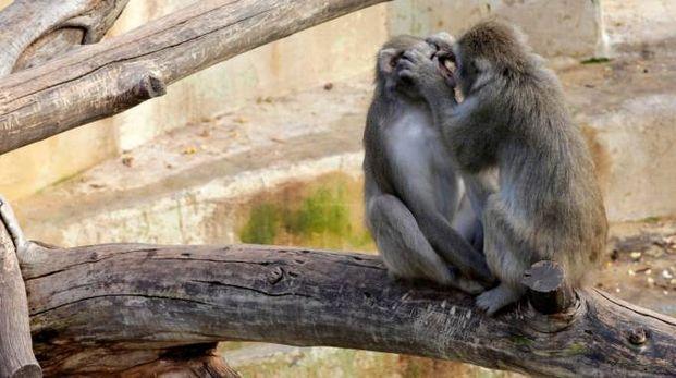 Scimmie in una foto L.Gallitto