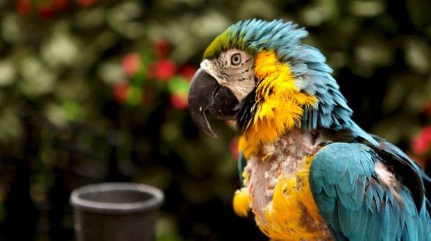 Un pappagallo (Foto L.Gallitto)