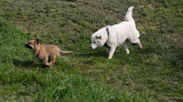 Un'area cani (foto d'archivio)