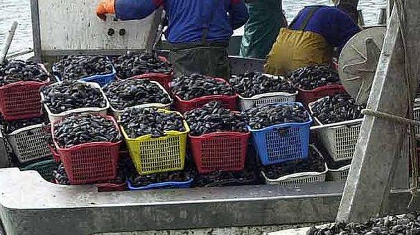 Pescatori di vongole (foto di repertorio)