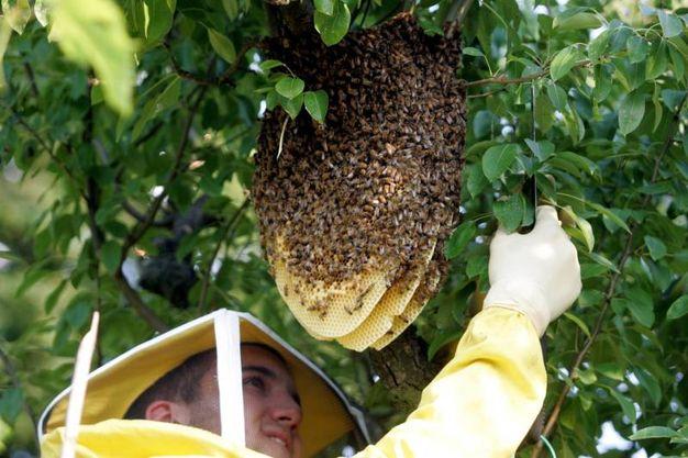 Per produrre il miele le api impollinano l'80% delle specie botaniche presenti in natura