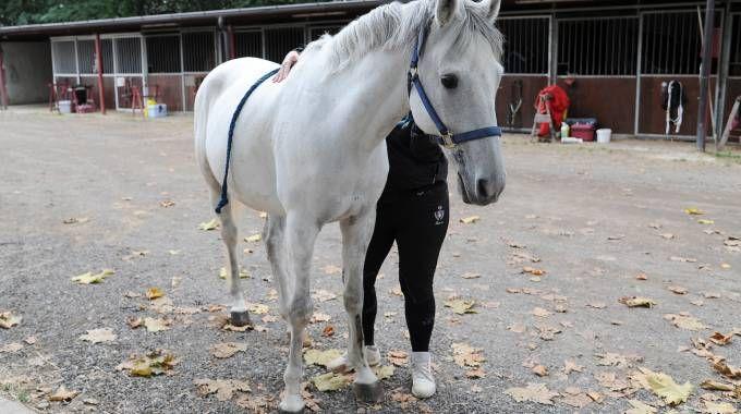 Il cavallo che si era imbizzarito al palio