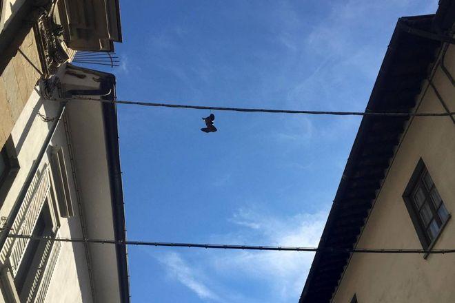 Appese Cavi Elettrici Diffusa Sui Scarpe Le Moda Una Firenze TwFqEI46n 1b3b9cd9d0f