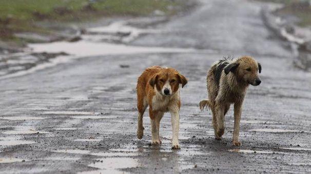 Cani randagi in una foto Ansa