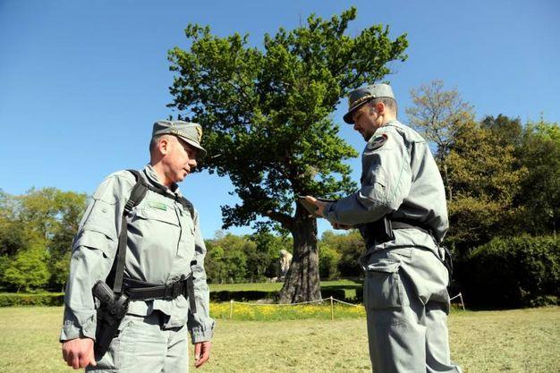 Il censimento del patrimonio verde secolare svolto dagli agenti della Forestale