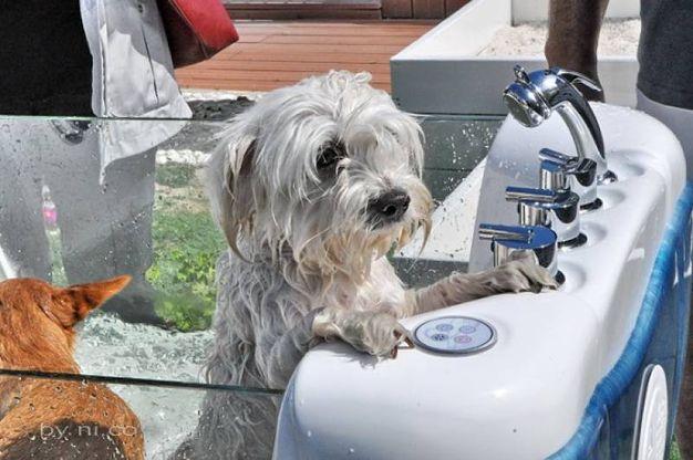 Un cagnolino dopo il bagnetto nella spa (foto Concolino)