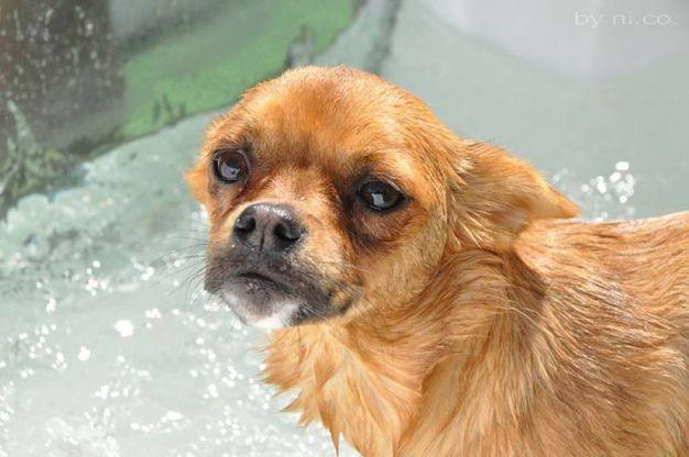 Un altro cagnolino mentre fa il bagnetto (foto Concolino)