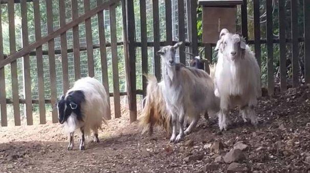 Alcuni degli ospiti dello zoo di Cavriglia