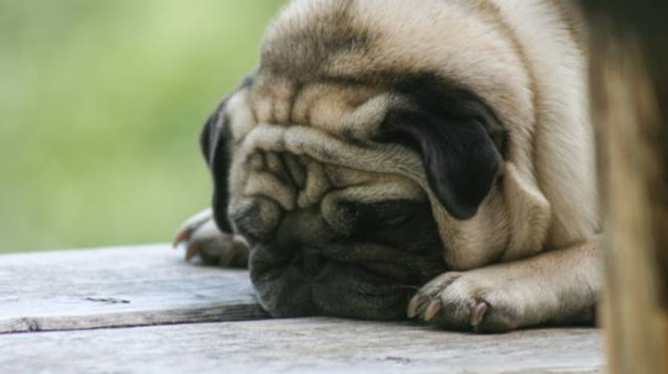 Cagnolino triste (Foto L.Gallitto)