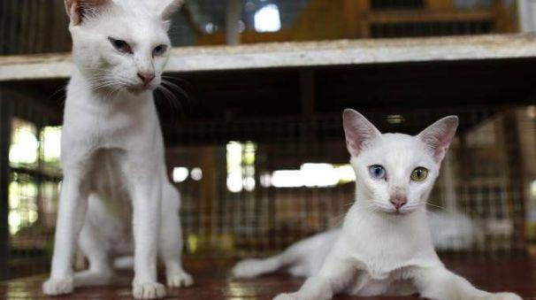 Gatti (Ansa)