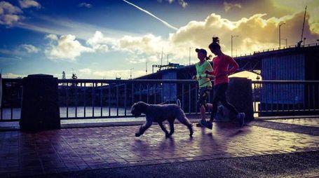 Prima di correre insieme al tuo cane assicurati che sia adatto / Foto Flickr/TMimages PDX