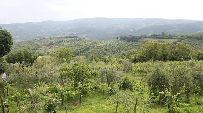 Un paesaggio del Chianti