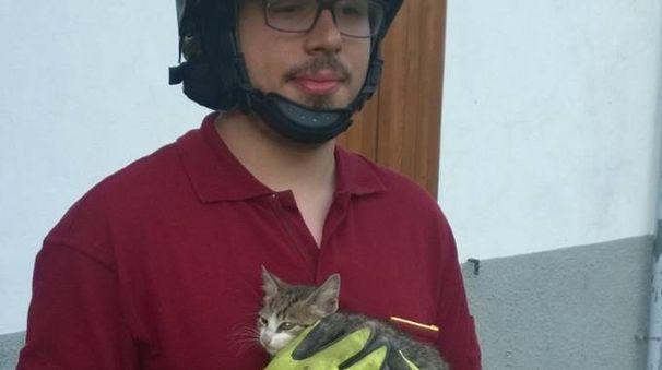Un vigile del fuoco tiene in braccio il gattino