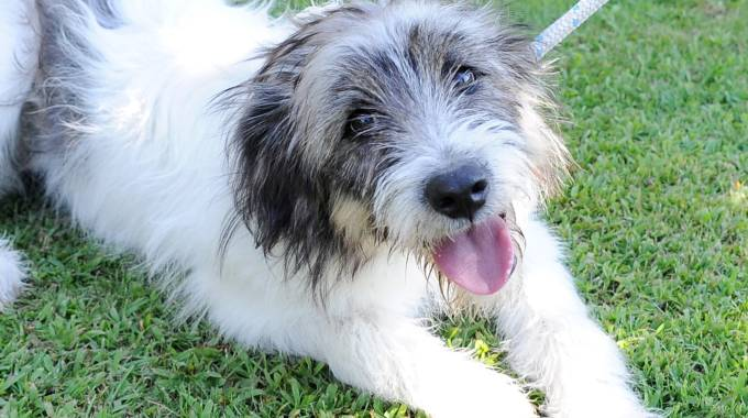 Il cane abbandonato a Boffalora (Studiosally)