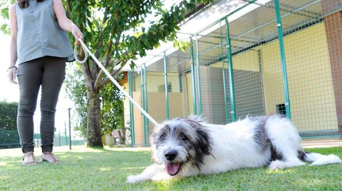 Il cane pronto per l'adozione: è stato affidato ai volontari del canile