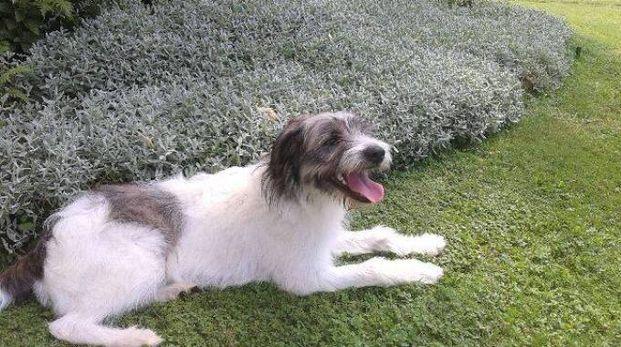 Il cane Boff nel giardino della nuova casa a Vimercate (Facebook)