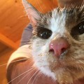 La gattina salvata ad Amatrice in una foto Enpa