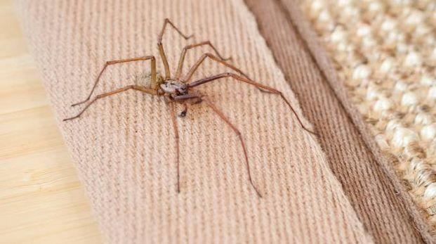 I ragni ascoltano suoni a lunga distanza - foto Geoff du Feu / Alamy