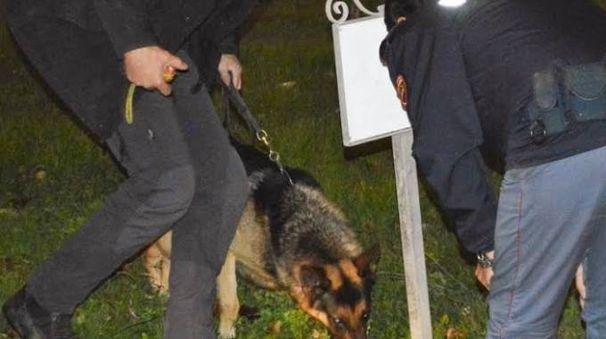 I cani scovano la droga nascosta dagli spacciatori