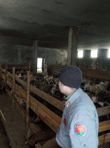 I Carabinieri Forestali sono intervenuti per ripristinare i contatti con un allevamento di 200 capre rimasto isolato a causa della ingente nevicata, nella frazione di Portola in Comune di Fiastra