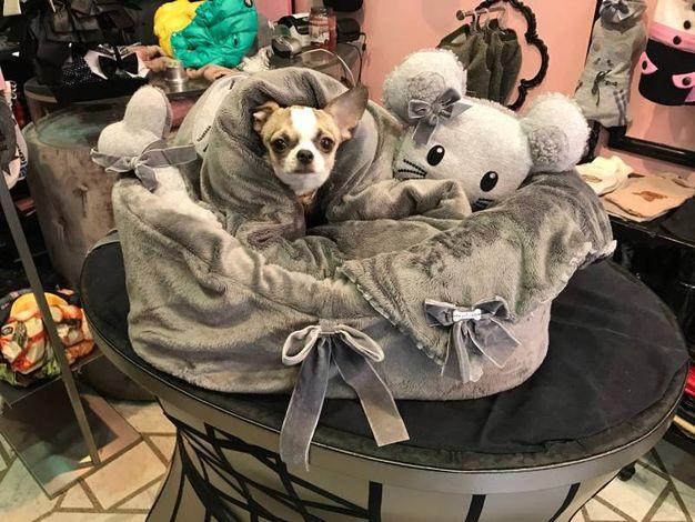 I sacco-cuccia sono particolarmente adatti per i cani di piccola dimensione