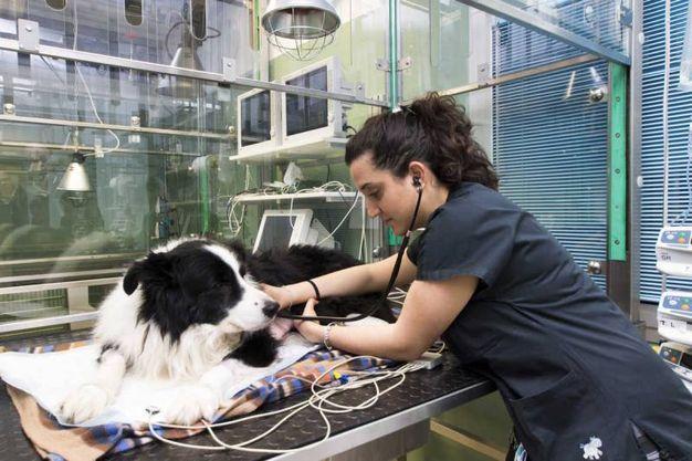 La clinica può ospitare fino a 60 pazienti a quattro zampe