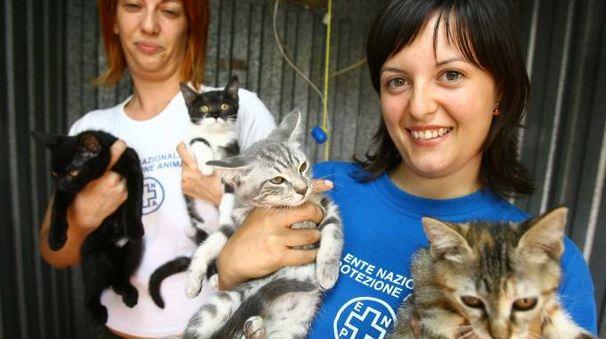 INSIEME I volontari della struttura dell'Enpa si occupano di cani  ma anche di diversi gatti (Radaelli)