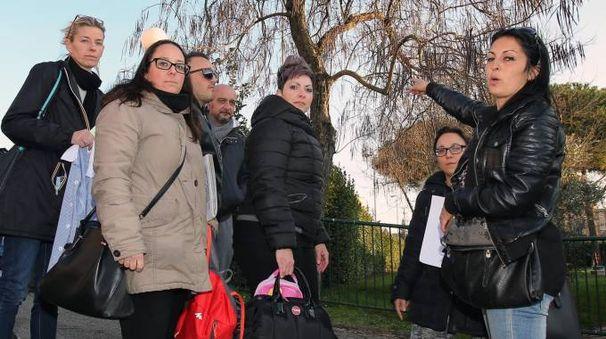 I genitori dei bambini della «Pio Fedi» davanti all'albero dove si trovano i topi