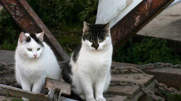 Gatti di strada