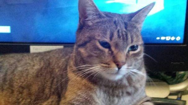 Il gatto Romeo dopo il salvataggio