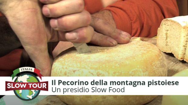 Montagna pistoiese: Il pecorino toscano presidio Slow Food