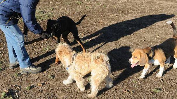 Un'immagine genercica dell'area  cani del parco Castello di Legnano teatro nei giorni scorsi dell'episodio