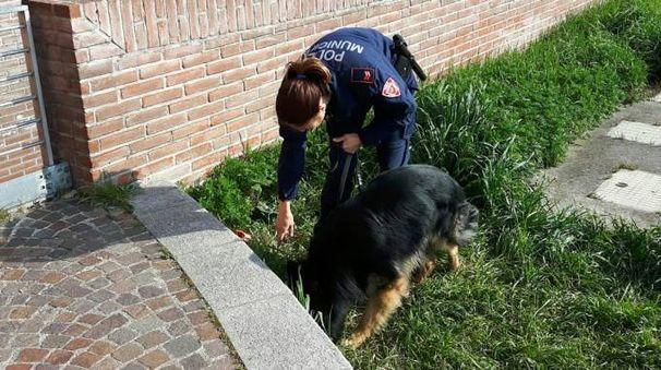 Akron e Devil sono i due cani antidroga in servizio a Prato