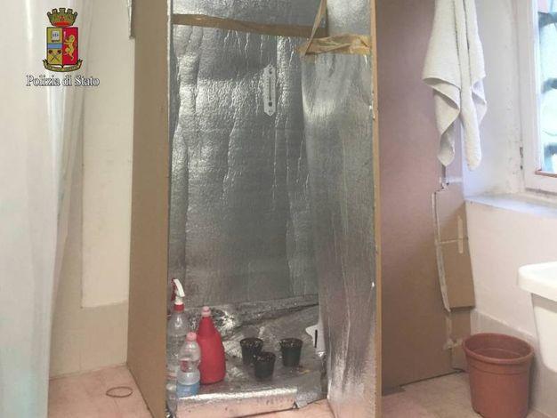 Parte della serra allestita nella lavanderia di casa dal sessantenne denunciato