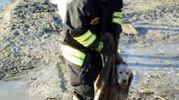 L'animale portato in salvo dai vigili del fuoco