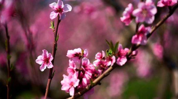 Equinozio di primavera (Afp)