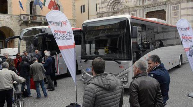 Alcuni dei nuovi bus (Foto Aprili)