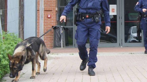 I cani antidroga della polizia municipale di Prato