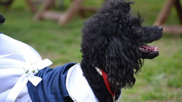 Chanel ha trionfato come maggiore somiglianza al suo padrone